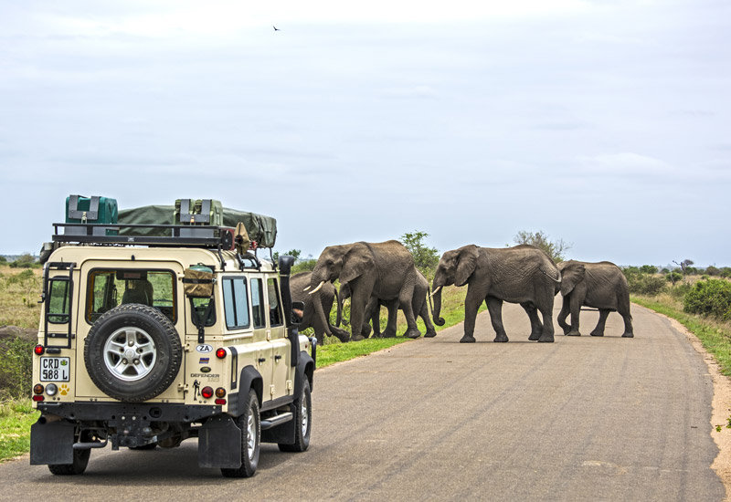 african safari website