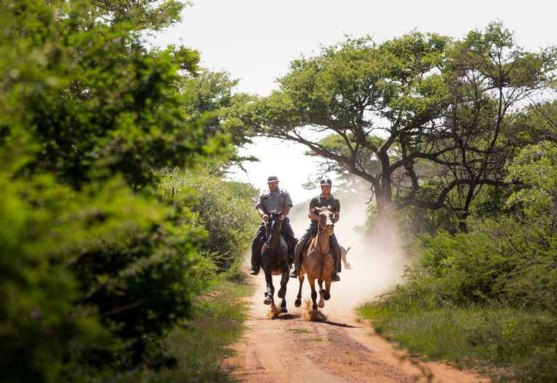 ant horse safaris - the ant collection riding south africa