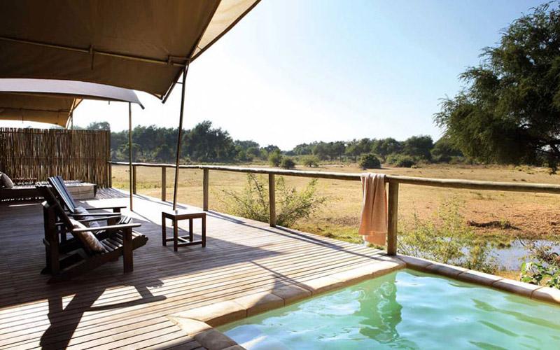 safari camp web design