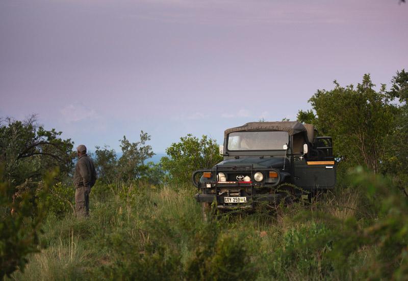 african safari camp web design