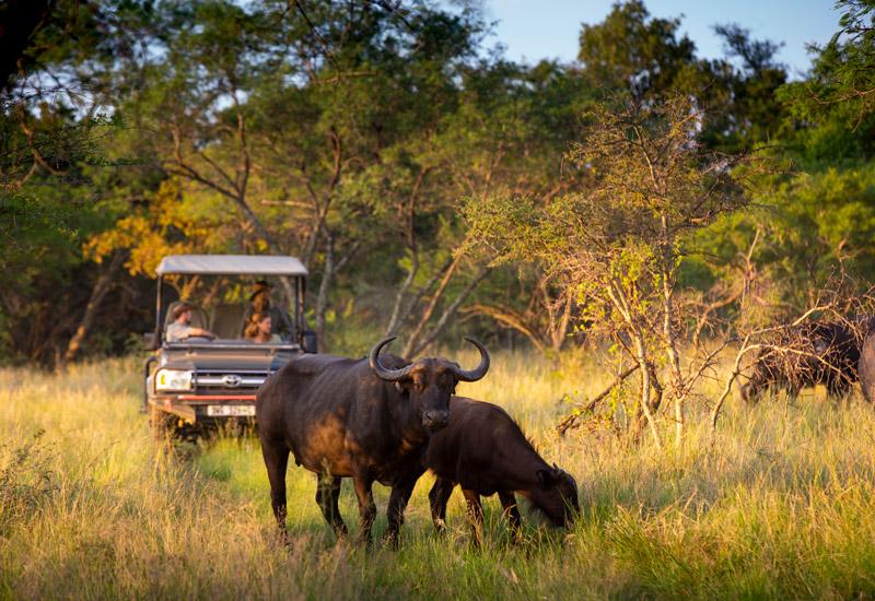 safari lodge website design