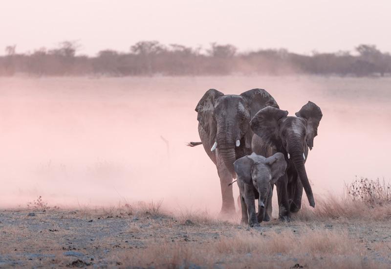 safari marketing services